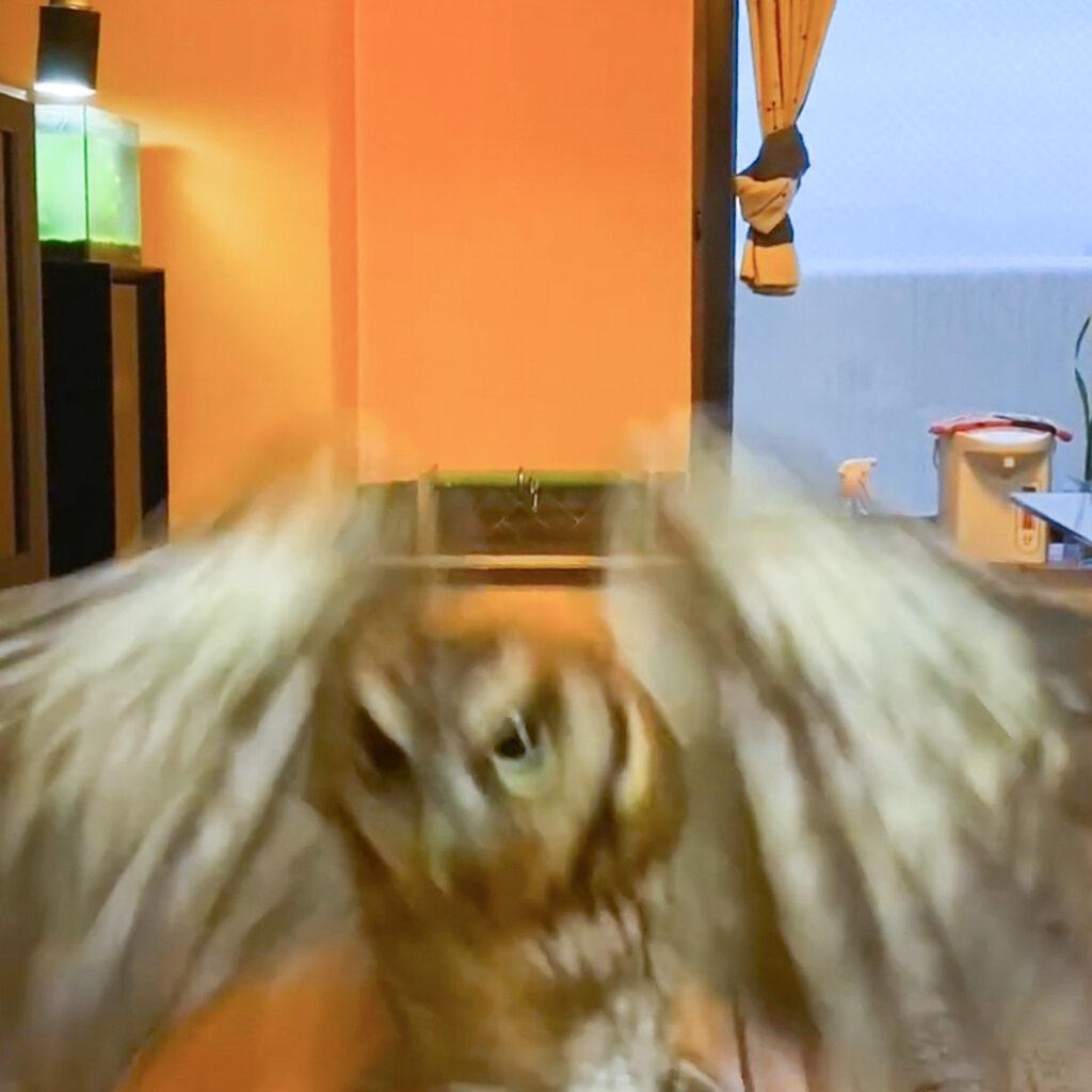小型フクロウのフライト
