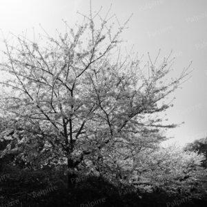 モノクロ風景写真003