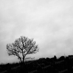 モノクロ風景写真004